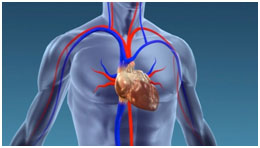 transplantation-cardiaque